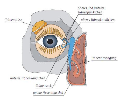 Behandlung der Tränenwege - Augenklinik Saar - Sulzbach